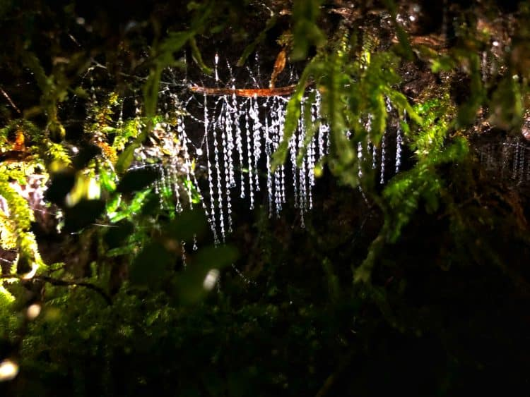 Shine for love or shine to kill – Australia's glow worms and fireflies