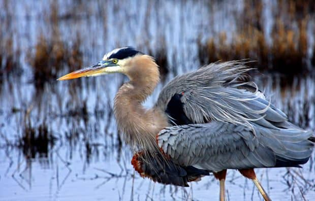 POLL: Should the Migratory Bird Treaty Act remain in place and be enforced?