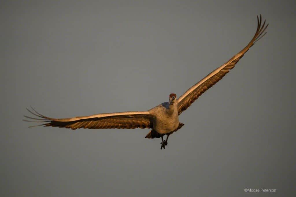 It's a Bird, It's a Plane, It's a ….