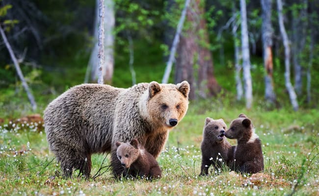 POLL: Should the trophy hunting of Grizzly Bears be banned nationwide?