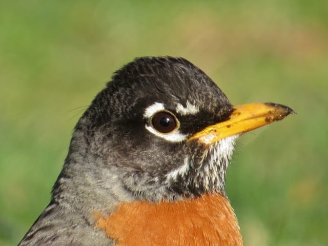 The Robin Says Why Am I Not Good Enough?