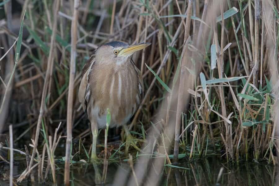 Summertime birding – Jubail