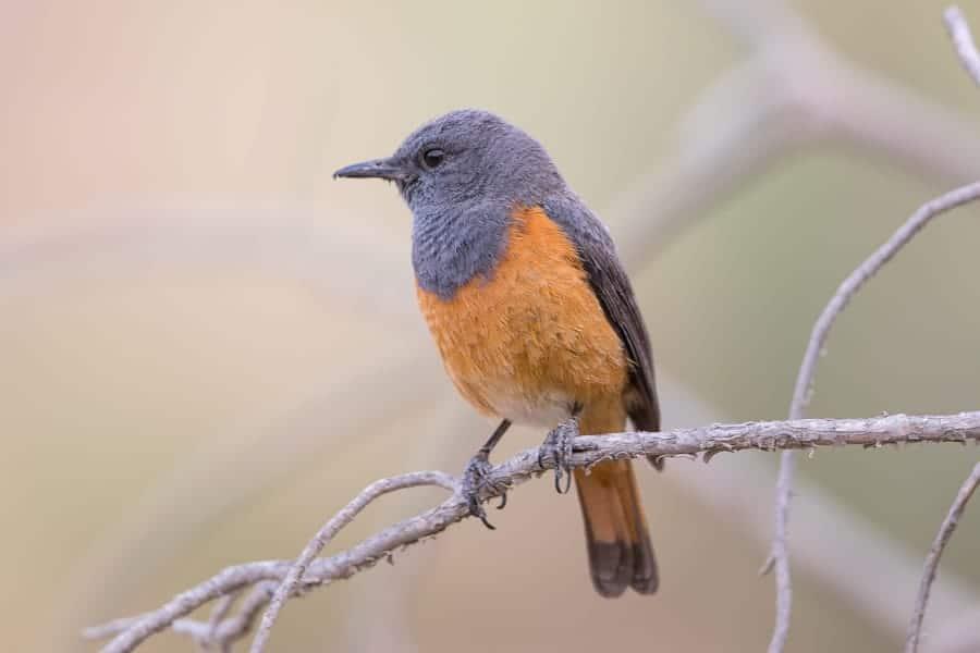 Birding Wadi Thee Ghazal – Taif
