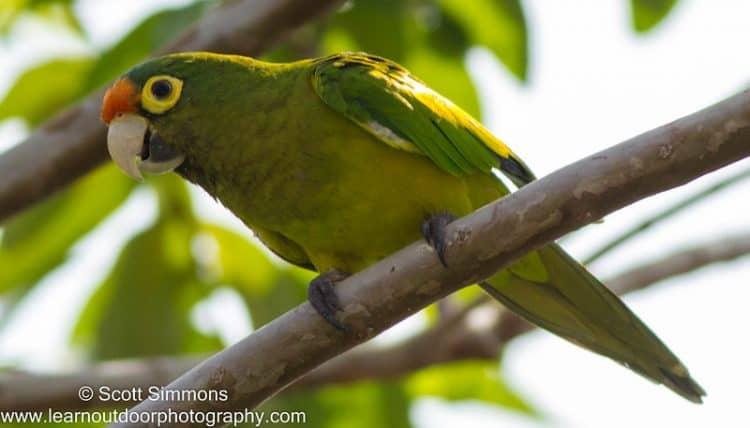 Acapulco Birding, Aug. 2015