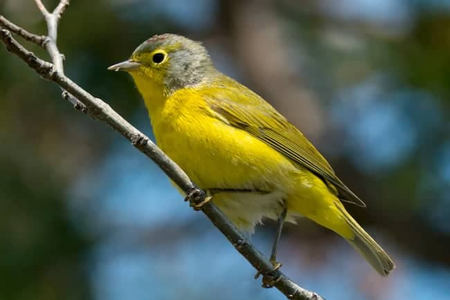 """POLL: Should a """"Lights Out"""" program be enforced to save migratory birds?"""