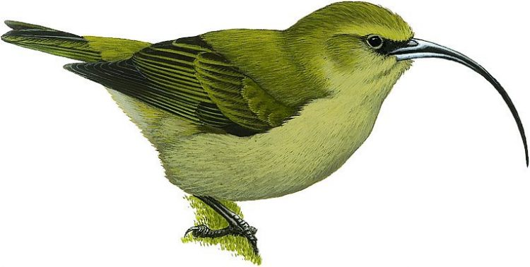 10 amazing birds that have gone extinct