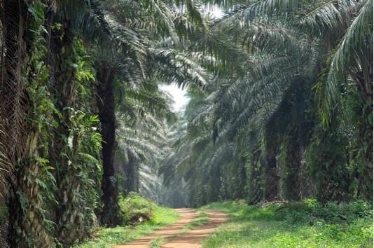 Palm Farm Habitat