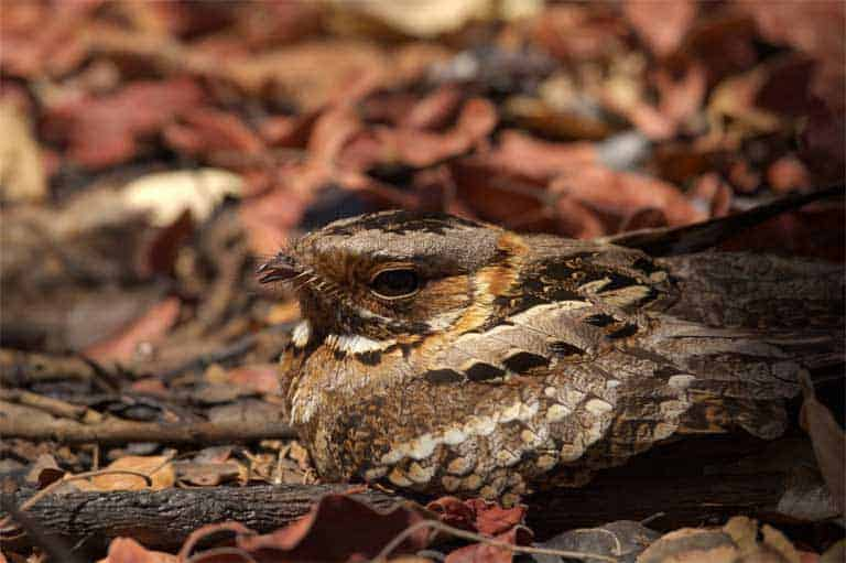 Scientists see like predators to prove camouflage works