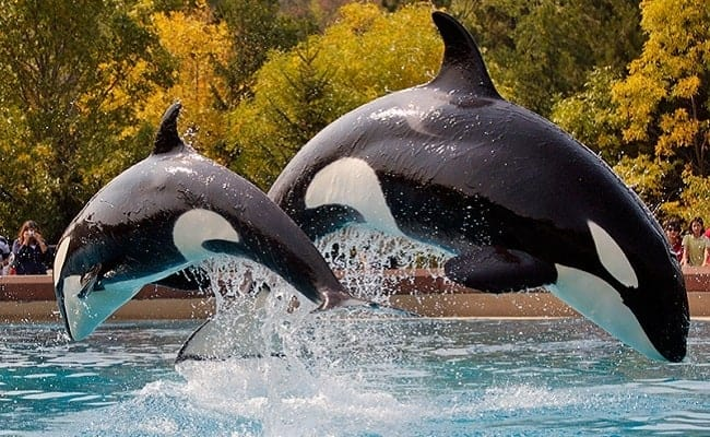 Marineland Sues Ontario SPCA for Trying to 'Destroy' Theme Park
