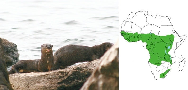 First Pan-African Otter Training Workshop held in Tanzania