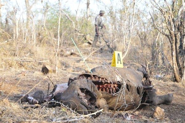 Six suspected poachers arrested at Kruger National Park