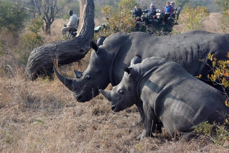 Poacher gets 37 years for killing mom and baby rhino