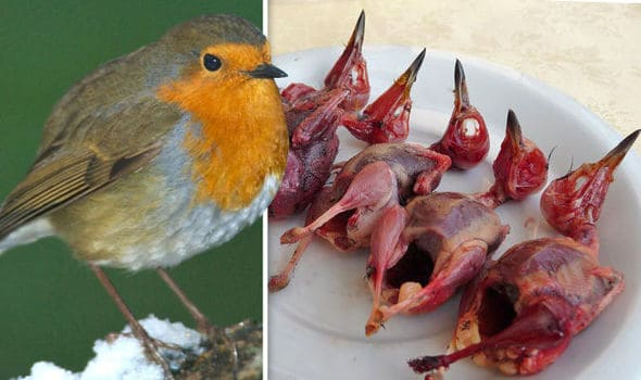 POLL: Should the slaughter of birds in southern Europe be stopped?