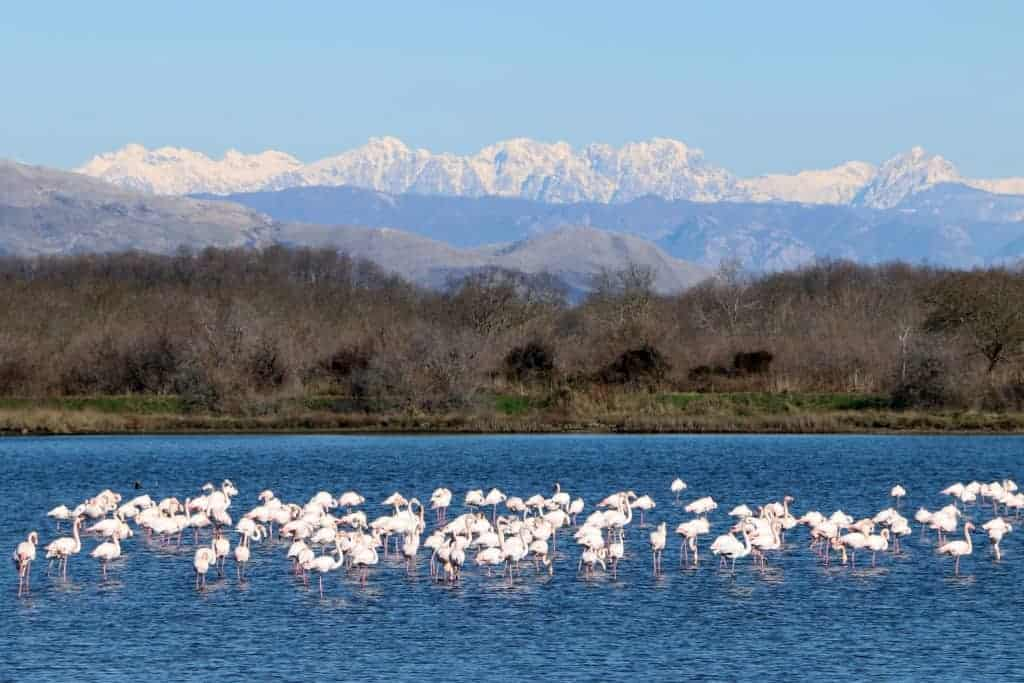 Ulcinj Salina's salt pans could be saved by the very birds it protects