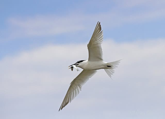One good Tern