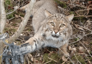 POLL: Should the killing of animals by Wildlife Services be stopped?