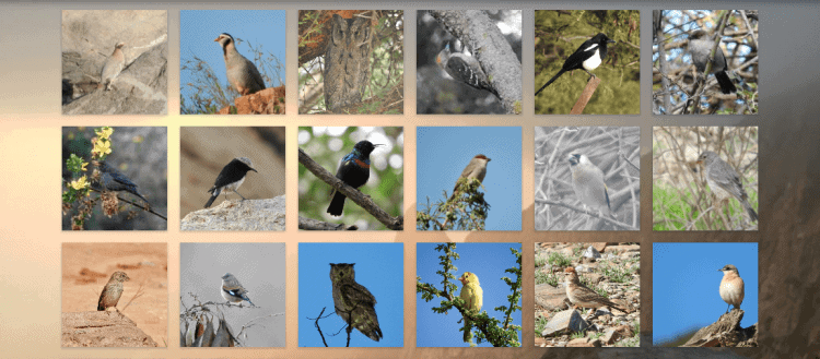 Jewels in the Crown: Introducing the Endemic Birds of Arabia