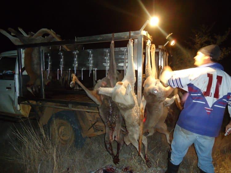 Shooter butchering
