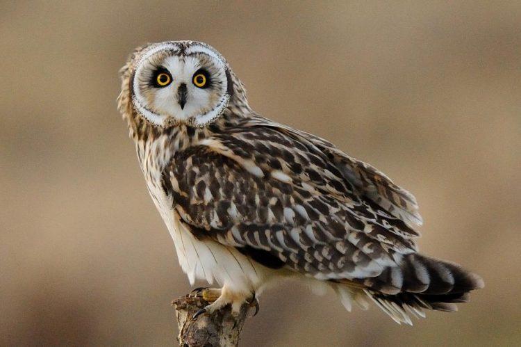 Video: Superb Owl Sunday