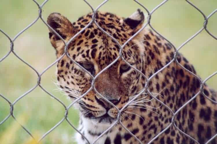 POLL:  Is it time to close our zoos?