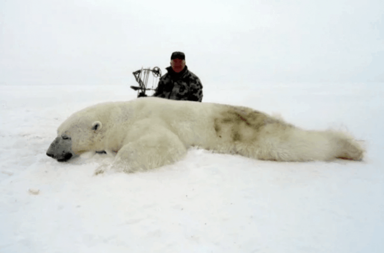 Remorseless Trophy Hunters Pose Over Polar Bear Corpses