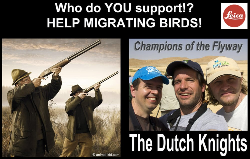 Support the Dutch Knights