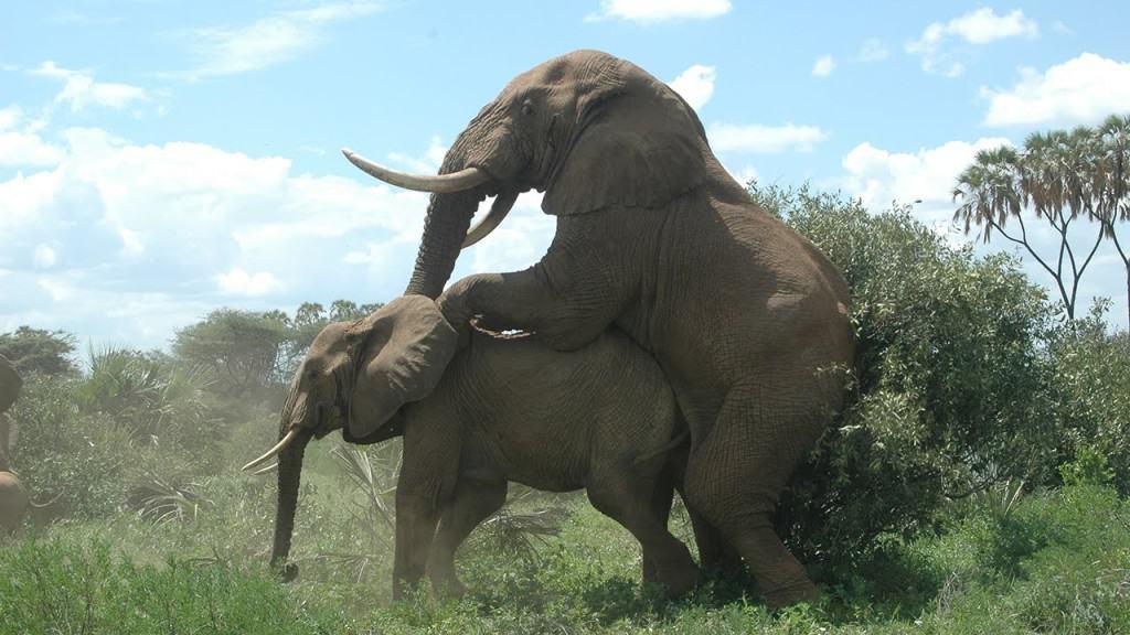 Elephant sex vedeo hip nudes fat