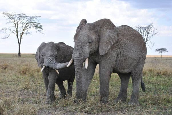 Hunter Who Gunned Down 5,000 Elephants Brags About 'Thrill'