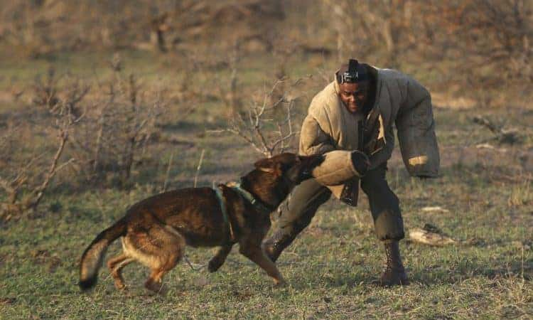 Hounds hot on the heels of poachers in rhino country