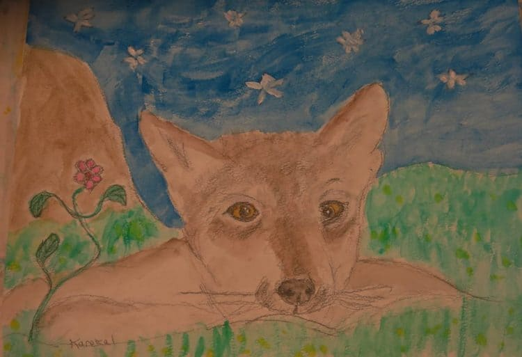 Wolf Awareness Week Starts Today