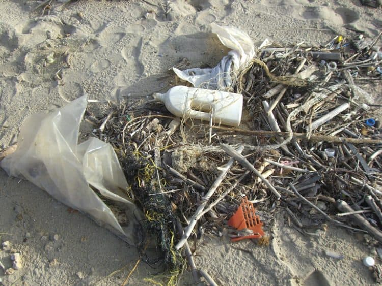 Plastics found in dolphins, seals, and whales in UK waters
