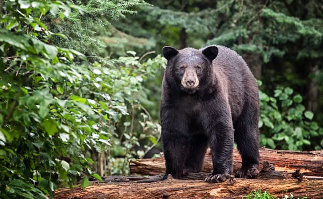POLL: Should more States suspend this cruel and deadly wildlife program?