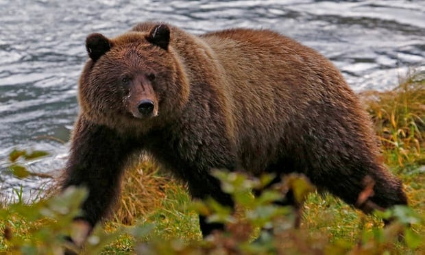 POLL: Should Trump be allowed to scrap hunting rules in Alaska?