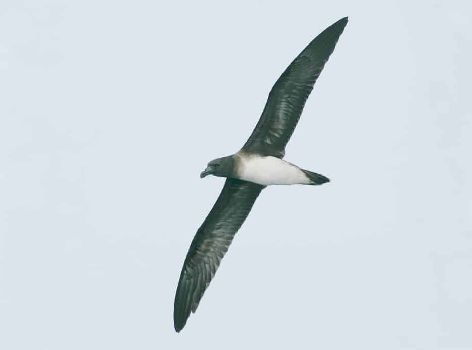 Finding Petrel: an eight day voyage of discovery