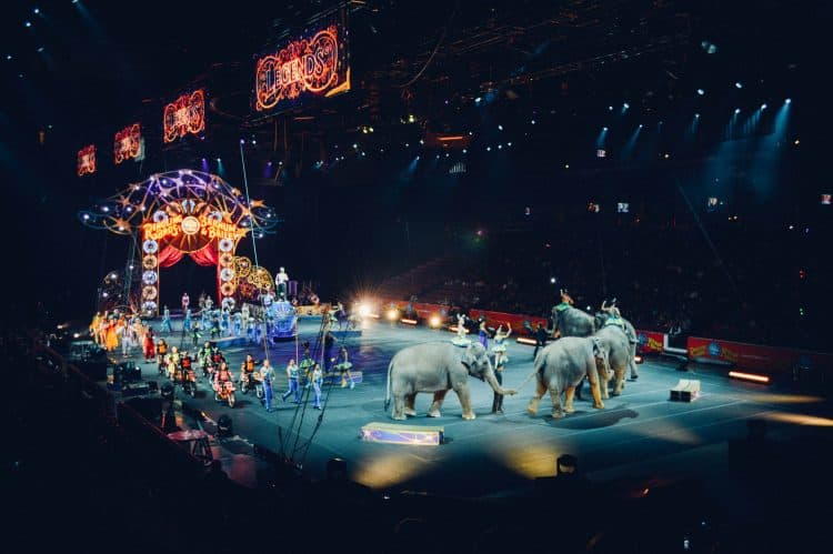 Denmark Saves Circus Elephants With Retirement Plan!
