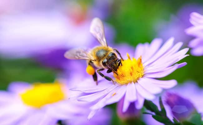 Ban on Bee-Killing Pesticides Overturned in National Wildlife Refuges