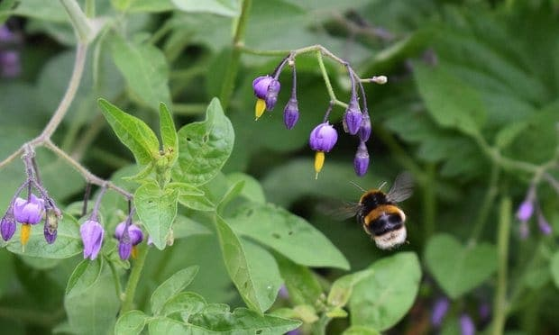 POLL: Should neonicotinoid pesticides be banned to save our bees?