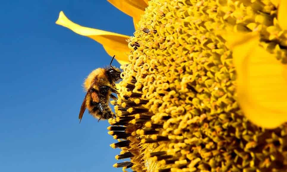 POLL: Should there be a complete ban on neonics to save our bees?