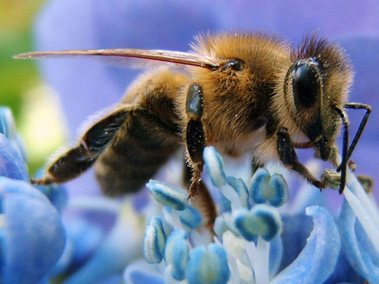 Bees and pesticides 'missing link' found