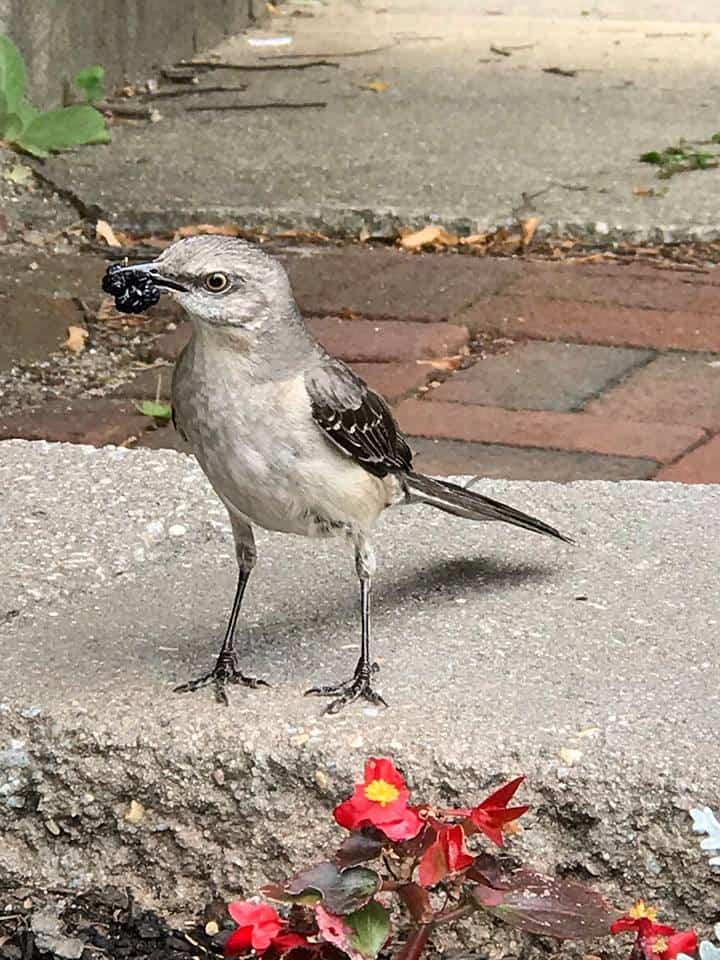 Birdie Friends