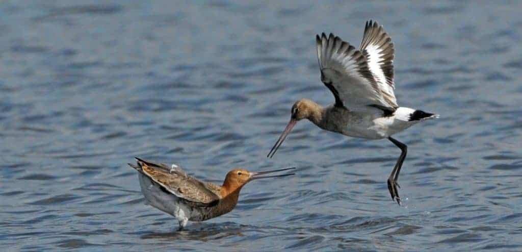 Justice for Dutch farmland birds