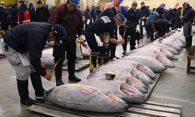 POLL: Should Japan be sanctioned for exceeding its bluefin tuna quota?