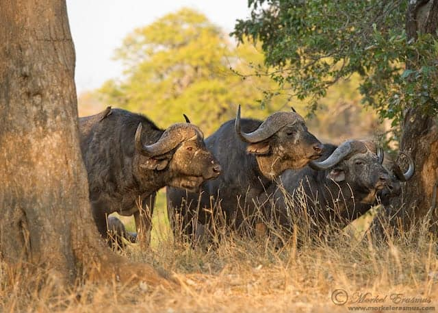 South Africa: Rich in National Parks