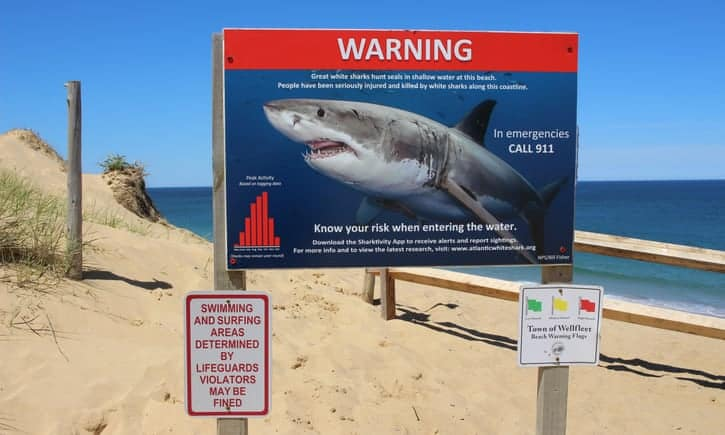 Echoes of Jaws as Cape Cod learns to live with rise of the great white shark