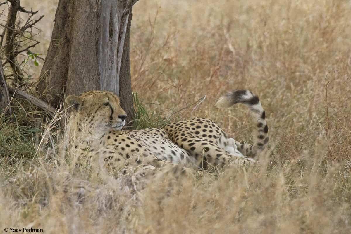 Mammals of Kruger Park