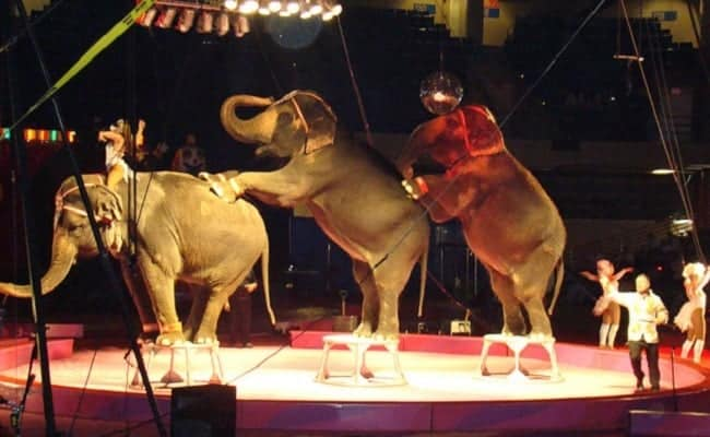 POLL: Should more cities ban wild animals in entertainment?