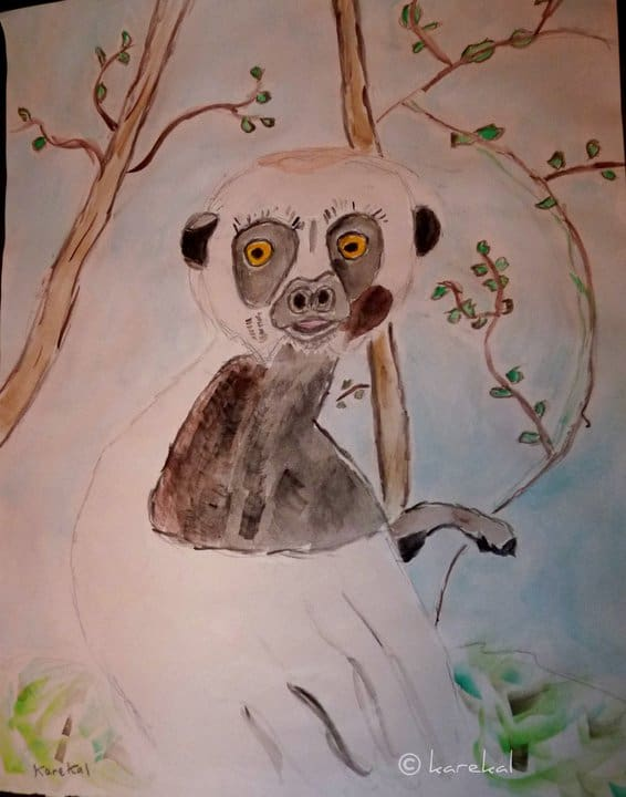 Coquerel's Sifaka And The Magic of Madascar