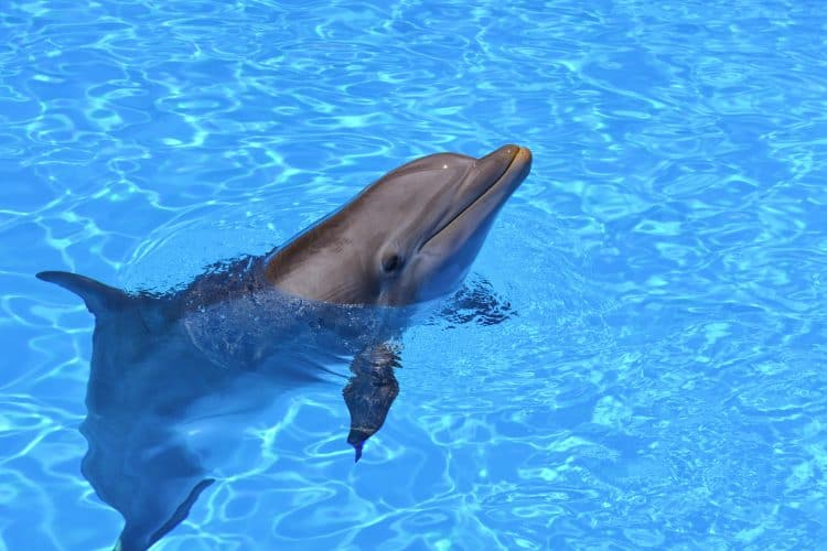 Booking.com No Longer Sells Tickets to Captive Animal Attractions!