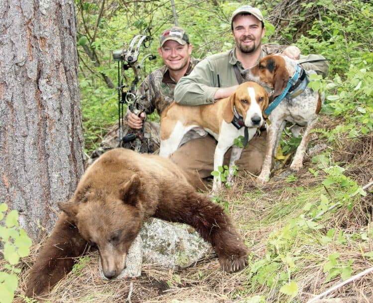 POLL: Should bear hunting be banned in the US?