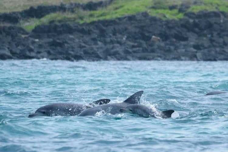 POLL: Should captive dolphins be released into the wild?